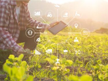 IoT農業事業
